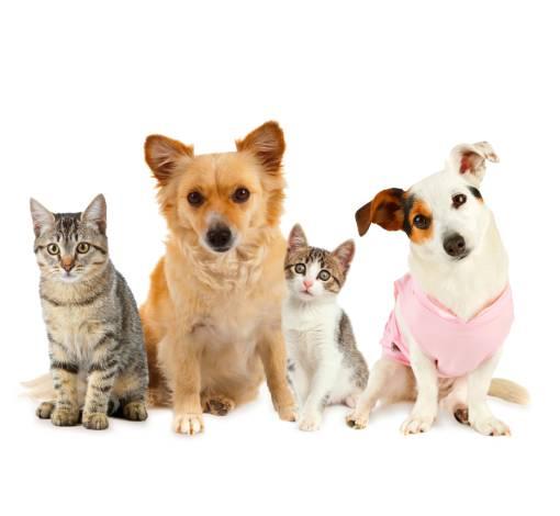 Plano de Saúde para Pets - Rio de Janeiro | Seguros e Plano de Saúde RJ